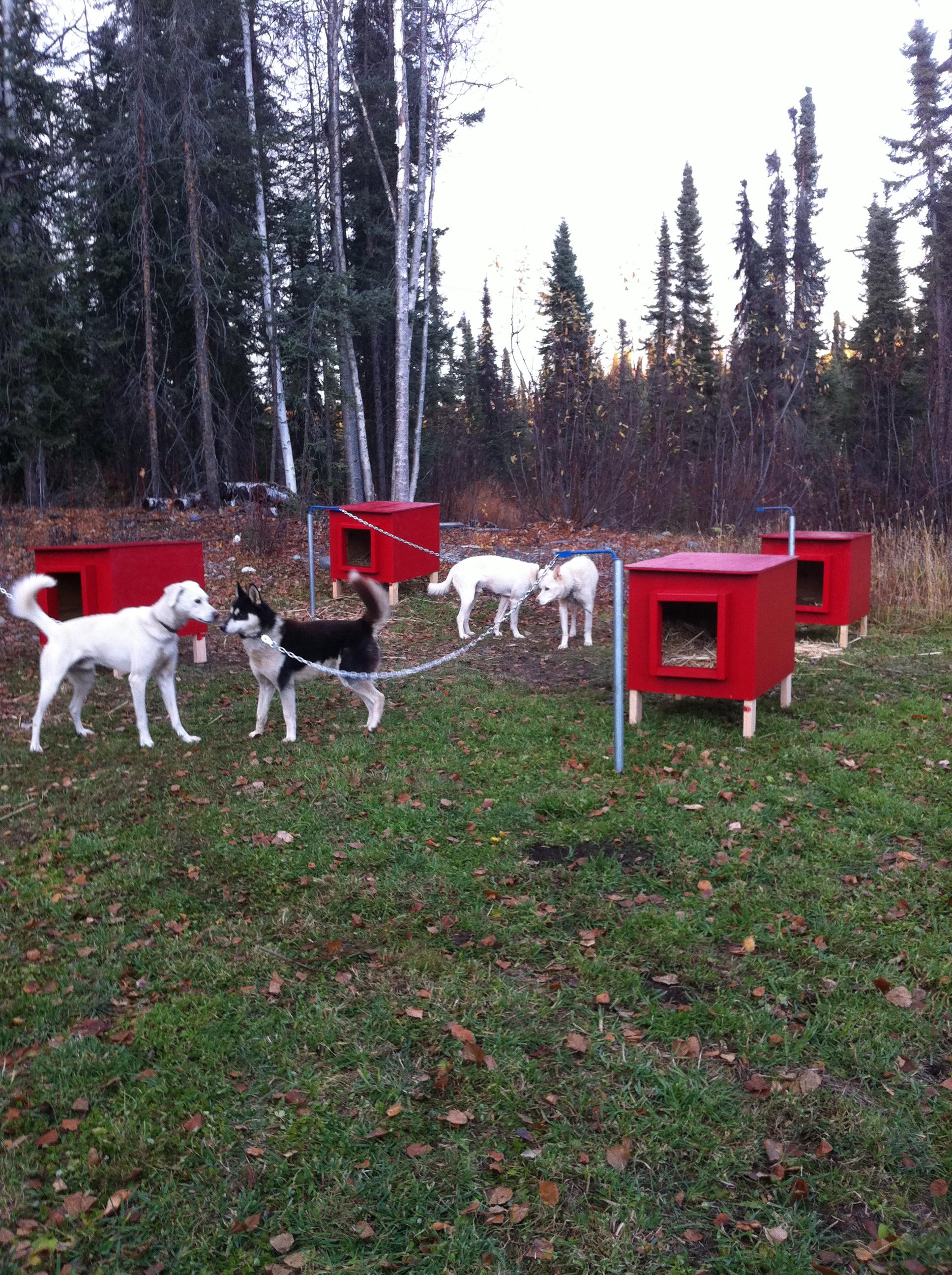 Dog Yard Set Up