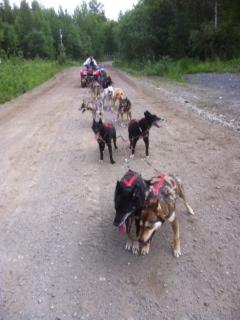 summer-solstice-training-run-team-ineka-1