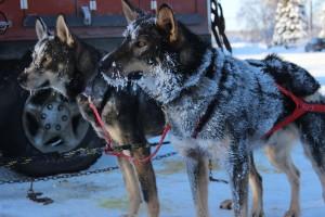 Valdez and Trapper | Team Ineka