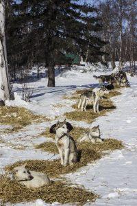 Dog_ES_Lineout