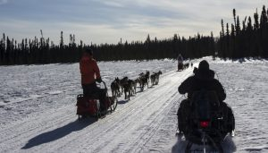 Random_Group_Dogs_SLed2