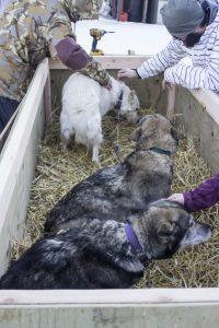 Rescue_dogs4